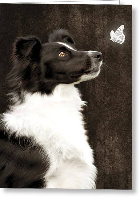 Dog Photographs Greeting Cards - Border Collie Dog Watching Butterfly Greeting Card by Ethiriel  Photography