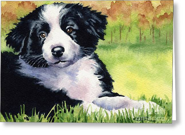 Puppies Paintings Greeting Cards - Border Collie Puppy Greeting Card by David Rogers