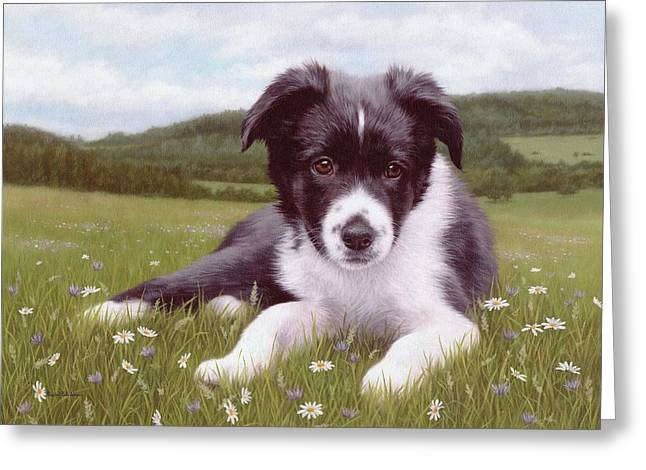 Border Collie Puppy Painting Greeting Card by Rachel Stribbling