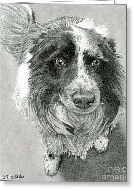 Border Collie Greeting Card by Sarah Batalka