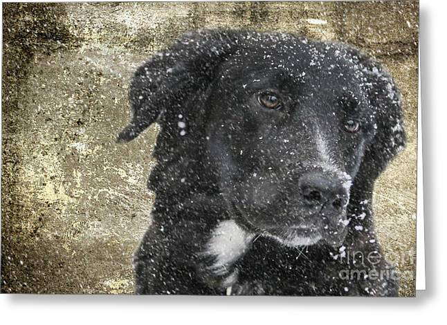 Border Collie Greeting Card by Stephen Smith