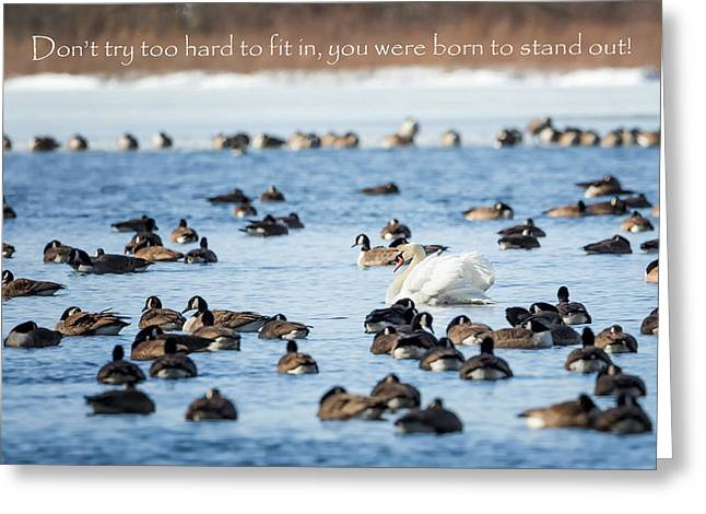Canada Geese Greeting Cards - Born to Stand Out Greeting Card by Bill Wakeley