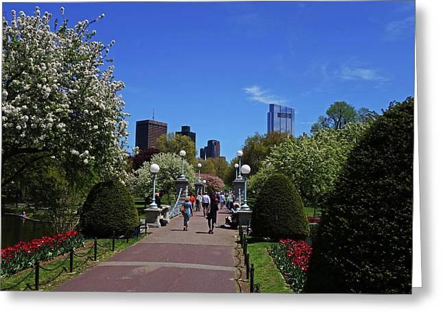 Boston Public Garden Spring Tree Bridge Boston Ma Greeting Card by Toby McGuire