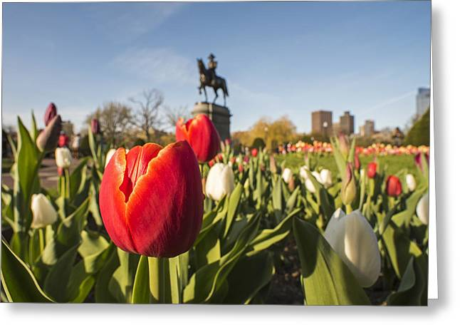 Boston Public Garden Tulips And George Washington Statue Greeting Card by Toby McGuire