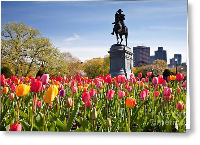 Back Photographs Greeting Cards - Boston Public Garden Tulips Greeting Card by Susan Cole Kelly