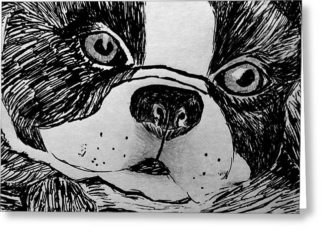 Pen And Ink Drawing Photographs Greeting Cards - Boston Terrier Drawing 15-01 Greeting Card by Maria Urso