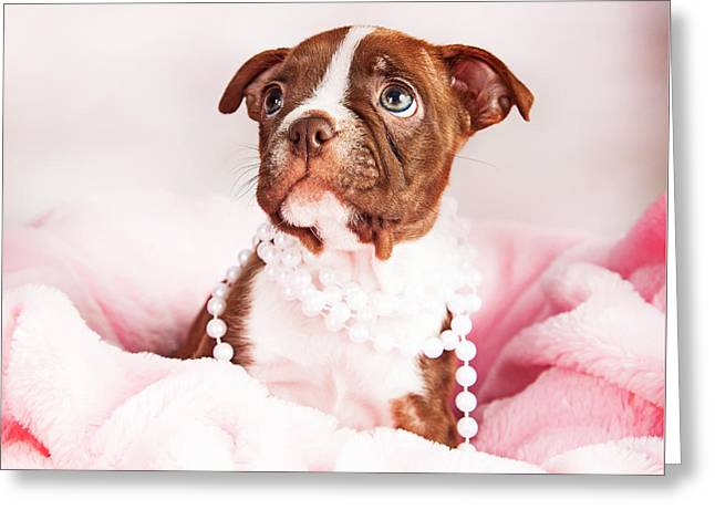 Puppies Photographs Greeting Cards - Boston Terrier Puppy in Pink Blanket Wearing Pearls Greeting Card by Susan  Schmitz