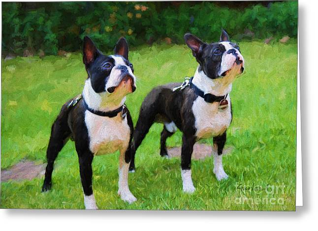 Black Top Greeting Cards - Boston Terriers  Greeting Card by Garland Johnson