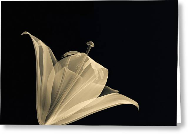 Botanical Study 3 Greeting Card by Brian Drake - Printscapes