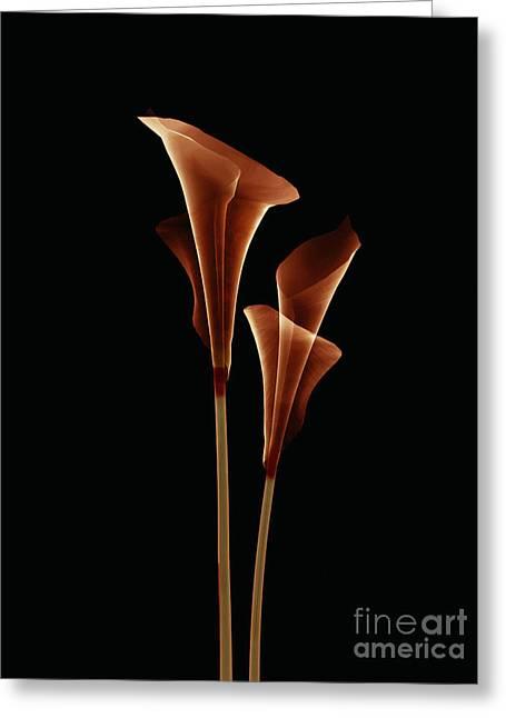 Botanical Study 5 Greeting Card by Brian Drake - Printscapes
