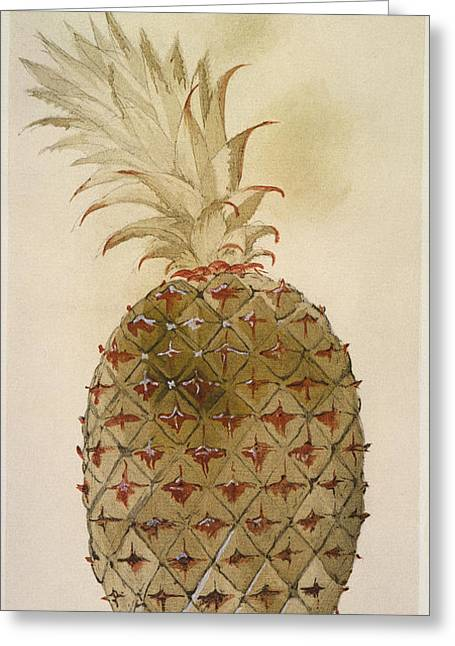 Ananas Greeting Cards - Botany: Pineapple, 1585 Greeting Card by Granger