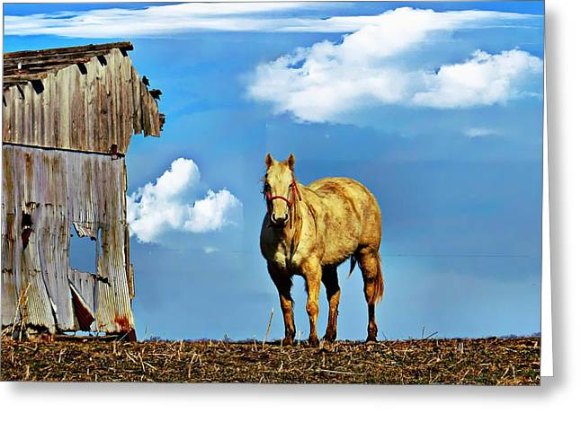 Pictures Of Horses Greeting Cards - Both a Little Raggedy Greeting Card by Julie Dant