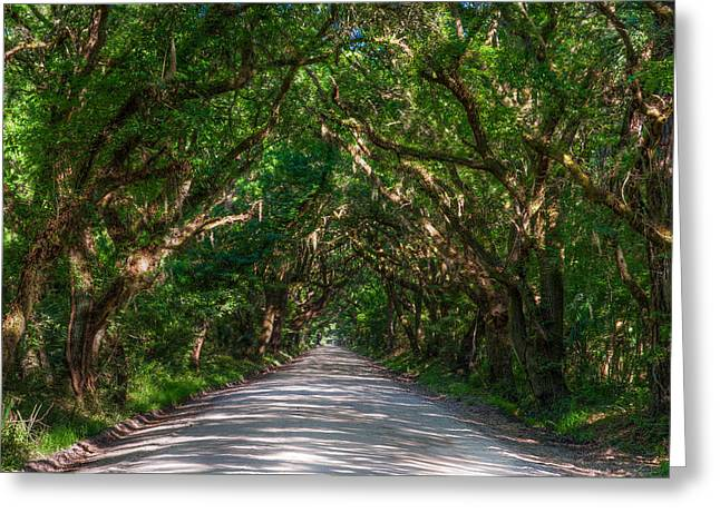 Overgrown Greeting Cards - Botnay Bay Road Greeting Card by Drew Castelhano