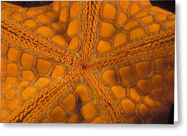 Star Fish Greeting Cards - Bottom Of Orange Sea Star Or Starfish Greeting Card by James Forte