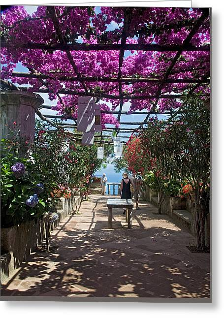 Bougainvillea Trellis Greeting Card by Terry Pridemore
