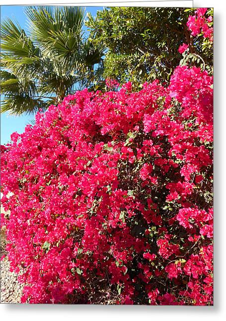 Bougainvillas 1 Greeting Card by Ron Kandt