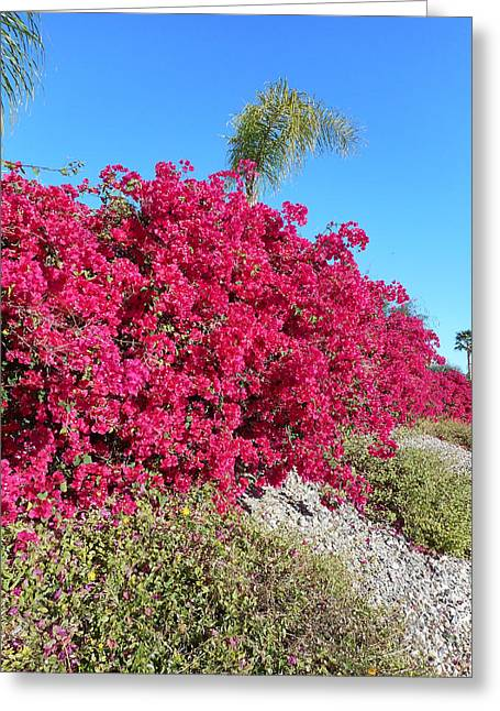 Bougainvillas 3 Greeting Card by Ron Kandt