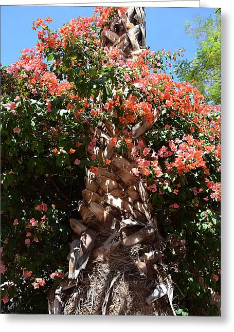 Pretty Flowers Greeting Cards - Bougainvillea on Palm Greeting Card by Aimee L Maher Photography and Art