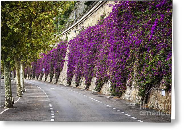 Pink Road Greeting Cards - Bougainvilleas in Villefranche-sur-Mer Greeting Card by Elena Elisseeva