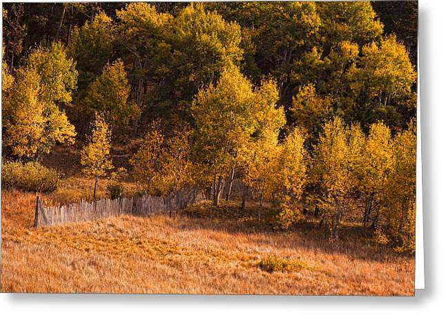 Striking Images Greeting Cards - Boulder County Colorado Autumn Landscape Greeting Card by James BO  Insogna