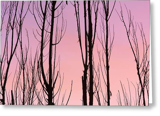 Striking Images Greeting Cards - Boulder County Colors of Dusk Abstract Greeting Card by James BO  Insogna