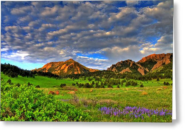 Cu Boulder Art Greeting Cards - Boulder Spring Wildflowers Greeting Card by Scott Mahon