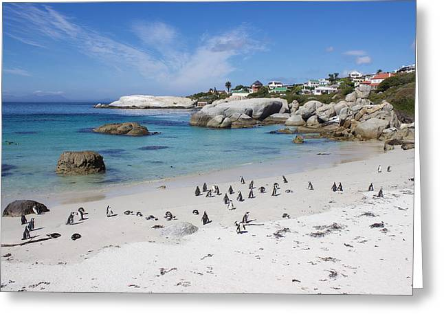 Sea View Greeting Cards - Boulders Beach Penguin Colony in South Africa Greeting Card by Joscelyn Paine