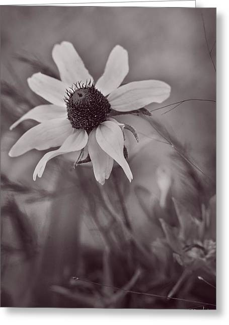Abstract Style Greeting Cards - Bouquet of One - Monochrome by fleblanc Greeting Card by F Leblanc