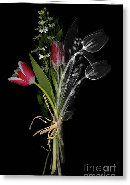 Science Collection - Greeting Cards - Bouquet X-ray Greeting Card by Ted Kinsman