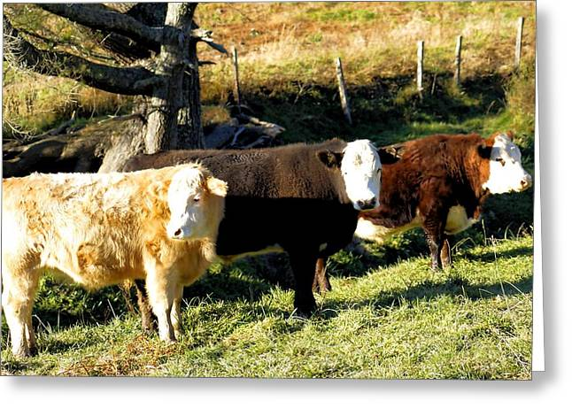 Charlotte Digital Art Greeting Cards - Bovine Brothers Greeting Card by Morgan Carter