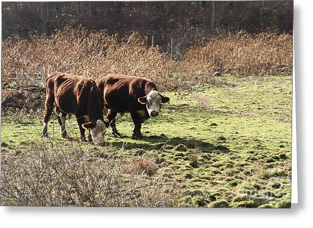 Bovine Pastures Greeting Card by B Rossitto