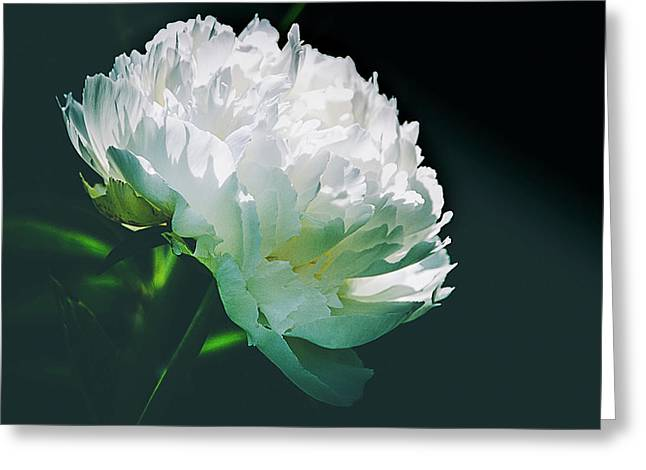 Bowl Of Cream Peony Greeting Card by Julie Palencia