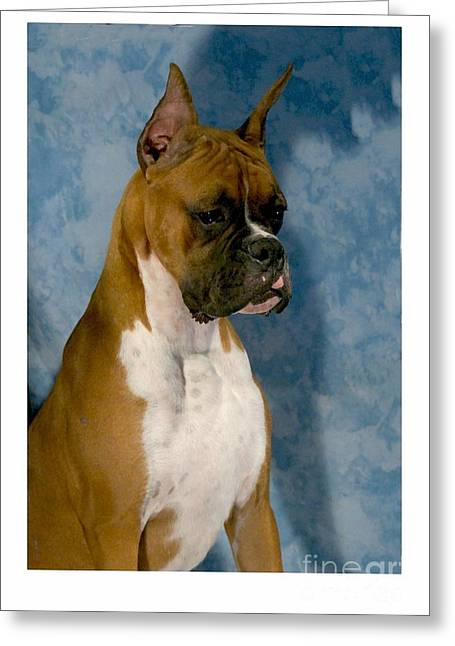 Recently Sold -  - Boxer Digital Art Greeting Cards - Boxer 151 Greeting Card by Larry Matthews