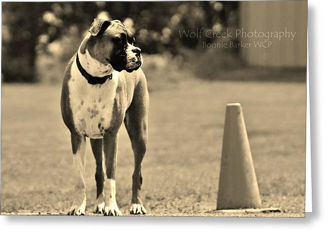 Puppies Photographs Greeting Cards - Boxer Greeting Card by Bonnie Barker