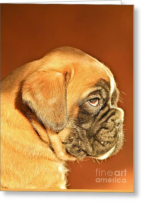 Puppies Photographs Greeting Cards - Boxer Dog Puppy Greeting Card by Dan Radi