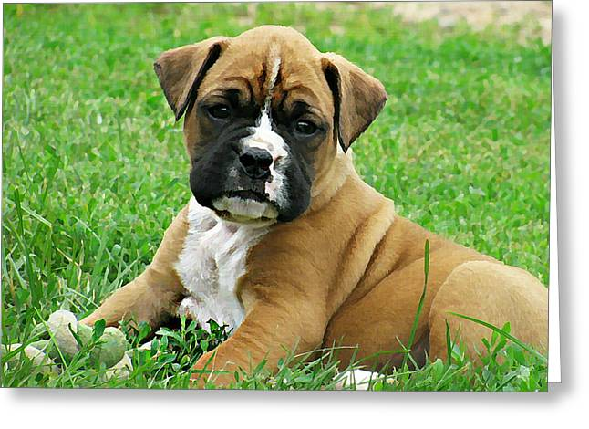 Boxer Digital Art Greeting Cards - Boxer Puppy Greeting Card by Linda Zielinski