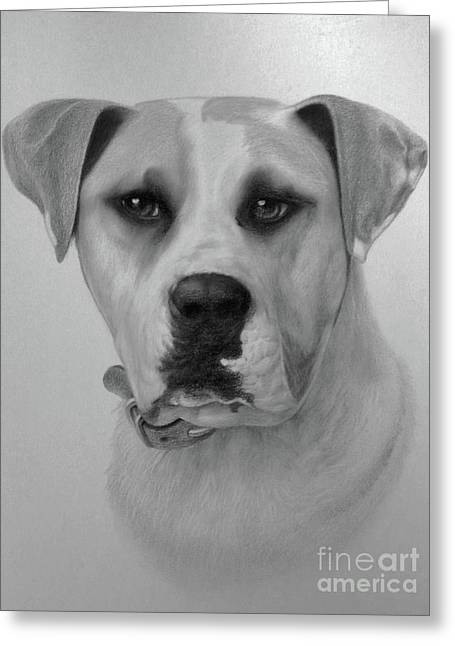 Charcoal Drawing Of Pets Greeting Cards - Boxer. Greeting Card by Wayne Evans