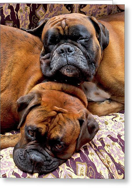Boxer Greeting Cards - Boys Asleep Greeting Card by Kenton Smith