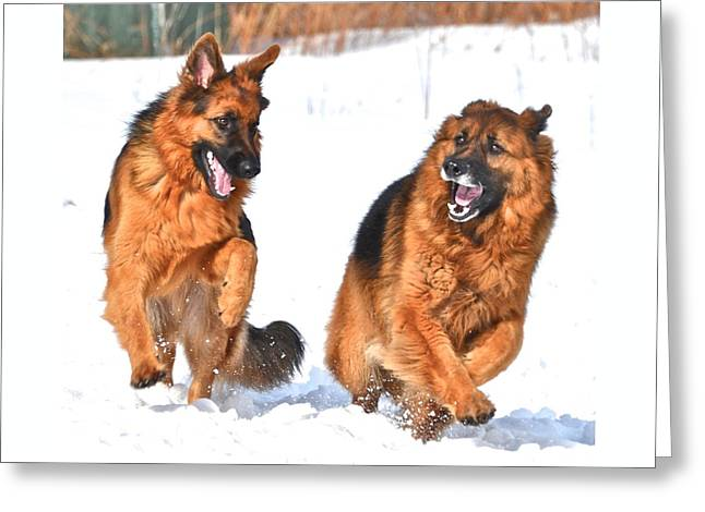 Dogs In Snow. Greeting Cards - Boys Day Out Greeting Card by Danielle Sigmon