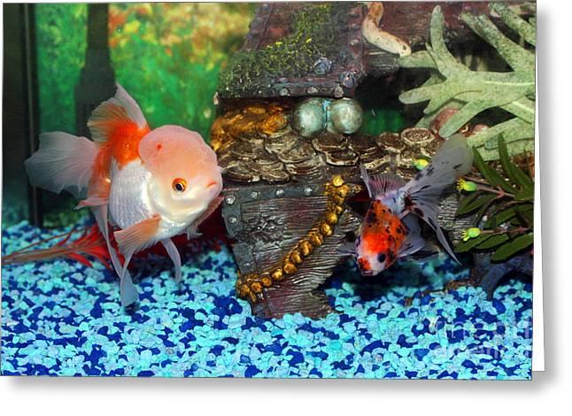 Oranda Greeting Cards - Brainy Fish Greeting Card by Joy Tudor