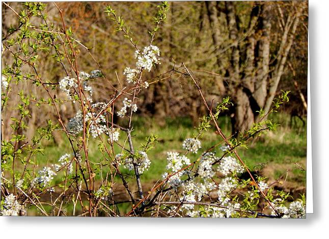 Wildlife Refuge. Greeting Cards - Bramble Vine Beauty Greeting Card by Wild Thing