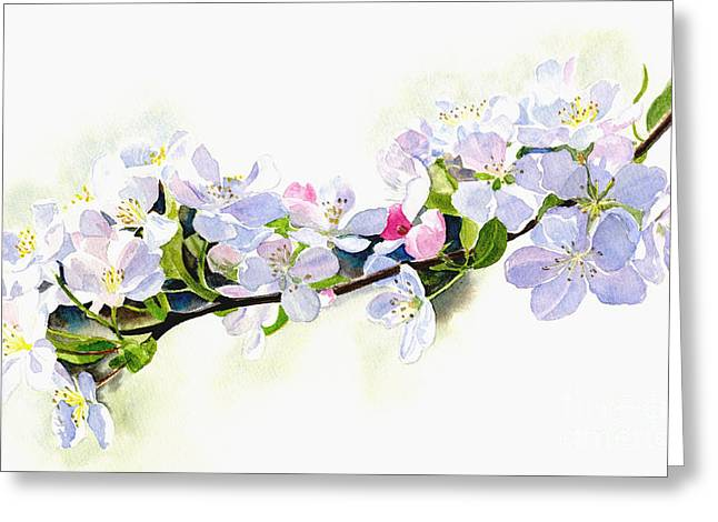 Branch Of White Shadowed Apple Blossoms Greeting Card by Sharon Freeman