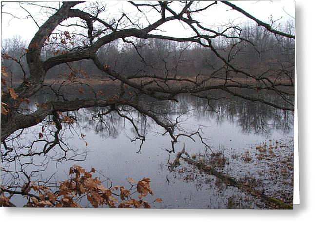 Indiana Springs Greeting Cards - Branches And Pond Greeting Card by Michael L Kimble