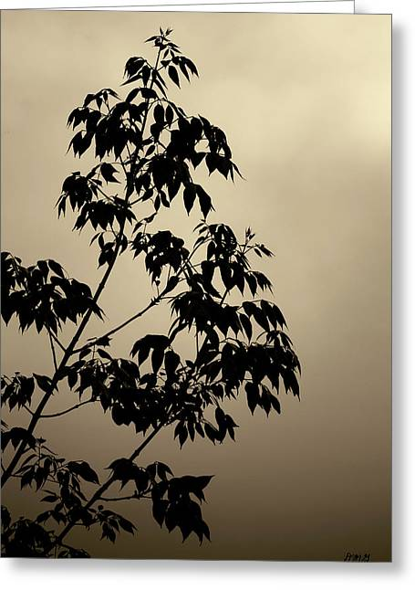 Brown Tones Greeting Cards - Branches and Sky Toned Greeting Card by David Gordon