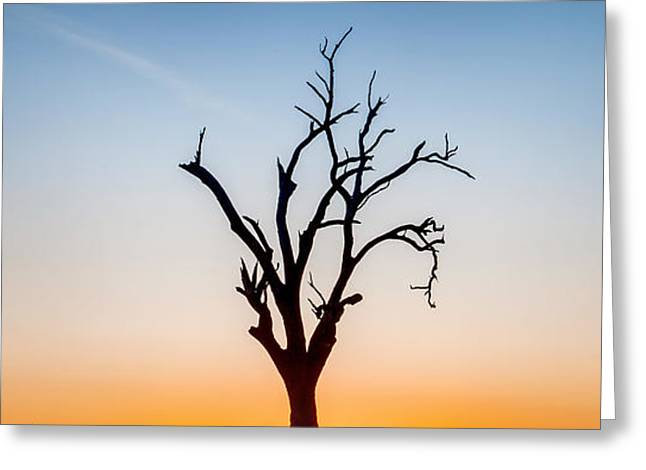 Burning Greeting Cards - Branches Greeting Card by Az Jackson