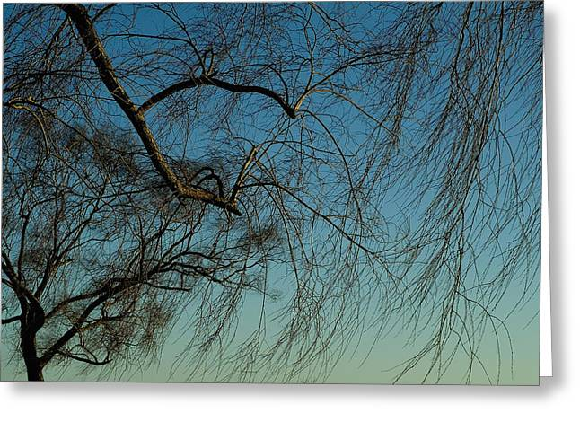 Groton Greeting Cards - Branches Of A Weeping Willow Tree Greeting Card by Todd Gipstein