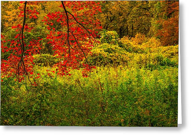 Colors Of Autumn Greeting Cards - Branches Of Red Greeting Card by Karol  Livote