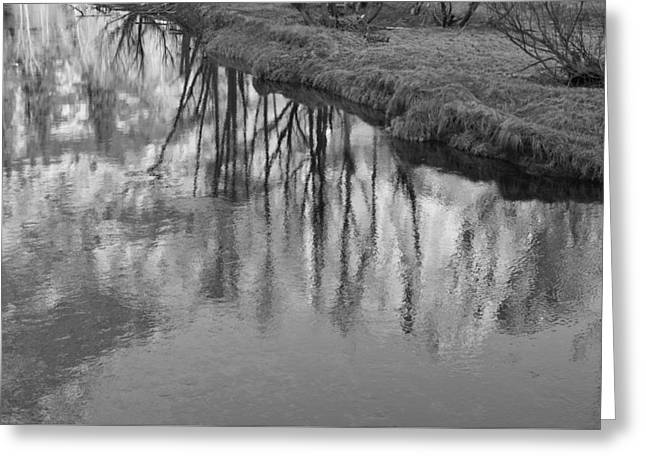 Branches Reflected Greeting Card by Priya Ghose