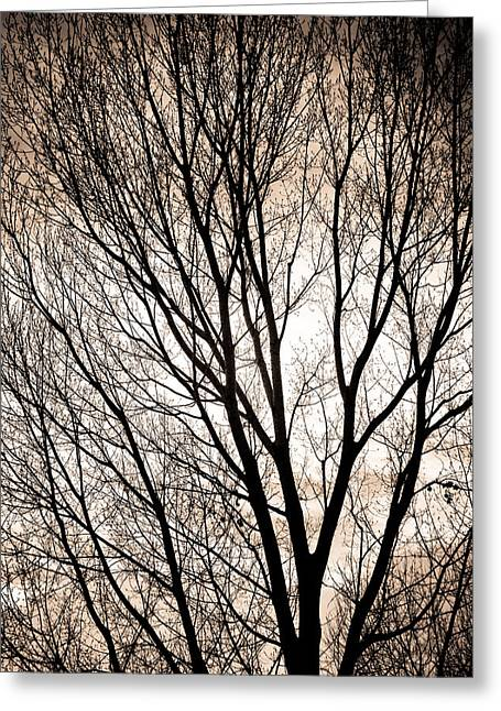 Longmont Greeting Cards - Branches Silhouettes Mono Tone Greeting Card by James BO  Insogna
