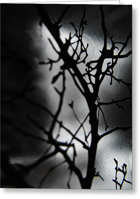 Exposing Thoughts Greeting Cards - Branches Greeting Card by Victoria Fischer